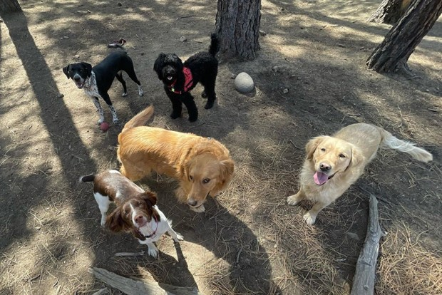 We heart all the dogs! Cheers to @bubblesdogcarebend for this snap of some of Bend's best friends. Tag us @sourceweekly for a chance to be featured here and as the Instagram of the Week in the Cascades Reader. - @BUBBLESDOGCAREBEND / INSTAGRAM