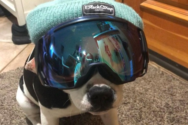 Dog in outdoor gear... gets us every time. @sunnythestaffie shared this photo of a pup who's very sad to see snow season go. But we'll see you soon on a paddle board, right buddy? Tag us @sourceweekly for a chance to be featured here and as the Instagram of the Week in the Cascades Reader! - @SUNNYTHESTAFFIE / INSAGRAM