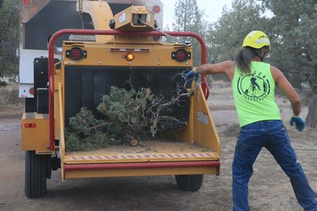 The woodchipper sends chips into a Central Oregon Tree Experts Truck as an arborist climbs up a tree taking branches as he goes. - JACK HARVEL