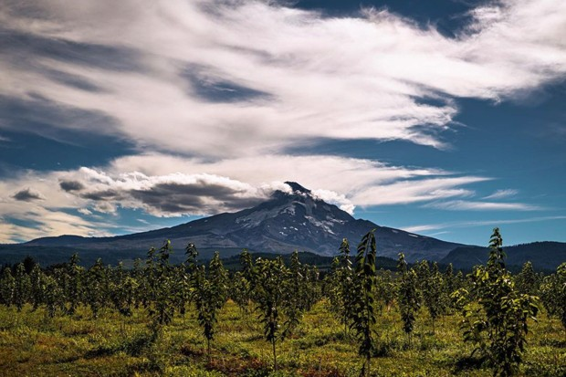 Check out this picturesque view of Mt. Hood! @cazztr0 shared this shot with us while picking fruit near the mountain. I'm sure the fruit were just as sweet as the views. Share your photos with us and tag us @sourceweekly for a chance to be featured here and as the Instagram of the week in the Cascades Reader. Winners get a free print from @highdesertframeworks - CAZZTR0/INSTAGRAM