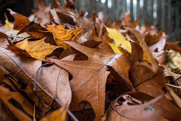 Save time, money and critical pollinators by leaving leaves alone. - FOTOXCAPTURE/PIXABAY