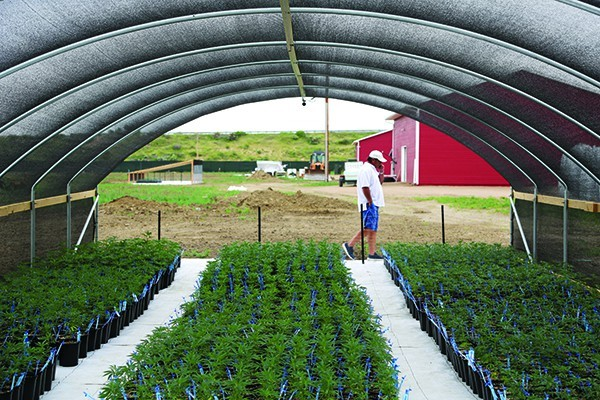 Mark Morley takes a business call while on his land east of Pueblo, where he is starting an outdoor marijuana grow called Los Sueños. In the foreground, pot clones are ready to plant.