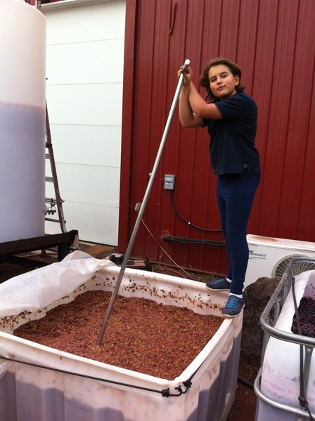 Samantha Maragas, 9, punches grapes with the best of them.