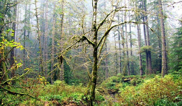 The Elliott State Forest lives on - OREGON DEPARTMENT OF FORESTRY
