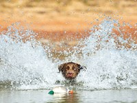 Adventure Dogs!