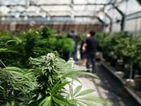 County Commission Holding Marijuana Hearing