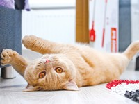 Is My Cat Bored? How Can I Get My Pets to Get Along