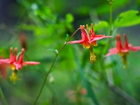 Ten Wildflowers to Watch for this Spring