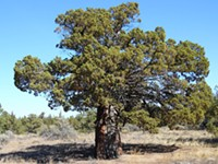 Protect Bend Trees