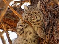 Bobcat Business
