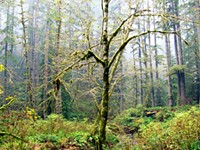 """Save the Trees"" just became a reality — the Elliott State Forest remains public"