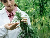 Skyrocketing Number of Cannabis Studies