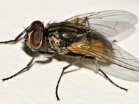 On Flies in Winter