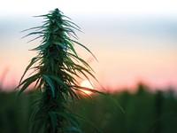 Marijuana Rules