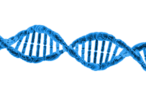 Double Dose of DNA for Genealogy