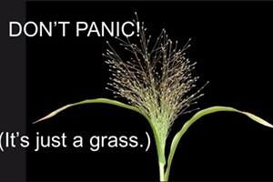 Don't Panic! (It's Just Grass)