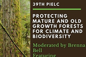 Protecting Mature and Old Growth Forests for Climate and Biodiversity