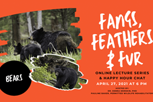 Fangs, Feathers, & Fur Online Wildlife Lecture Series: Bears