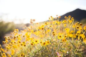 Annual Wildflower Show & Pollinator Festival
