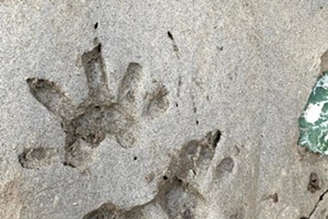 Wildlife Tracking Certification