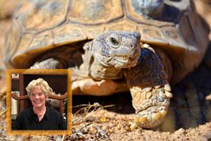 Know Des(s)erts - The Ecology & Behavior of Mojave Desert Tortoises