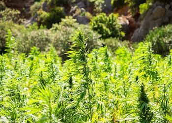 Marijuana amendments take back seat to demagoguery at county board meeting