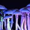 Oregon Voters to Consider Psilocybin Therapy, Drug Decriminalization this Fall