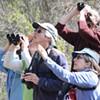 Birds in Binoculars