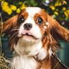 Picturesque Pups