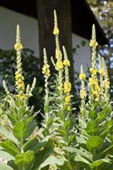 Uploaded by Fettle Botanic Bend