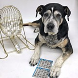 B-I-N-G-O benefits Animals - Uploaded by Humane Society C.OR