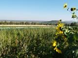 Rainshadow Organics Farm - Uploaded by laurelw