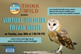 Join Think Wild for Virtual Trivia Night! - Uploaded by sallythinkwild