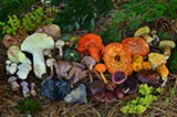 Learn how to identify mushrooms. - Uploaded by Amanda A