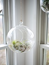 Air Plants - Uploaded by Paige Ferro