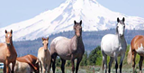 24e86628_horses_for_accent_event.png