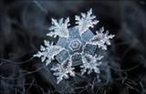 743ff219_snowflake.jpg