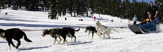 sled_dog.jpg