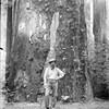Bohemian Grove Logging Edging Closer