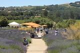 1e744065_dowl_in_lavender_garden.jpg