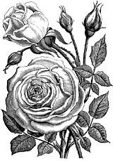 flowers-0506.jpg