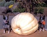 cb049041_pumpkin-festival-small.jpg