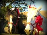 0d8d1cba_holiday_horses.jpg