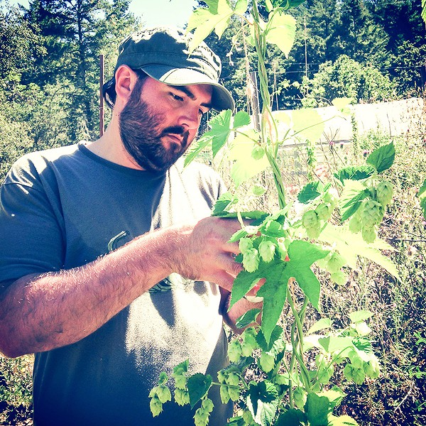 IN THE HOP YARD Fogbelt's Remy Martin picks hops by hand for a saison; eventually he and partner Paul Hawly want to produce all their hops locally. - PAUL HAWLEY