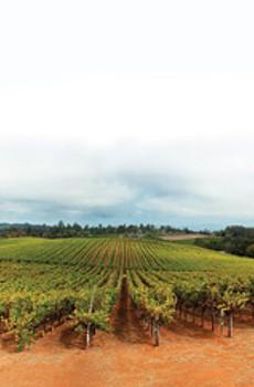 OLD WAYS: Dehlinger Winery's estate vineyards in Sebastopol have been dry farmed since 1975.