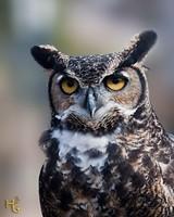 d8696927_horned-owl-essence.jpg
