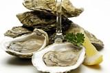 db94c92b_86574662_oysters_148650c.jpg