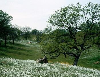 parkland-0508.jpg