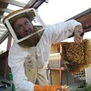 Bees 'R' Us