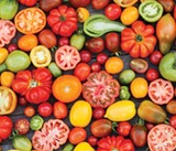 Rainbows of Tomatoes